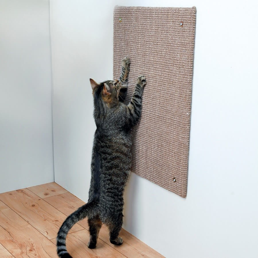 Griffoir Chat Carton Design quel est le meilleur griffoir pour chat ?