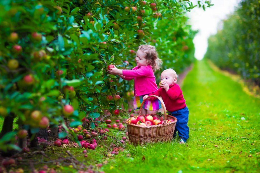 Cueillette de fruits et légumes
