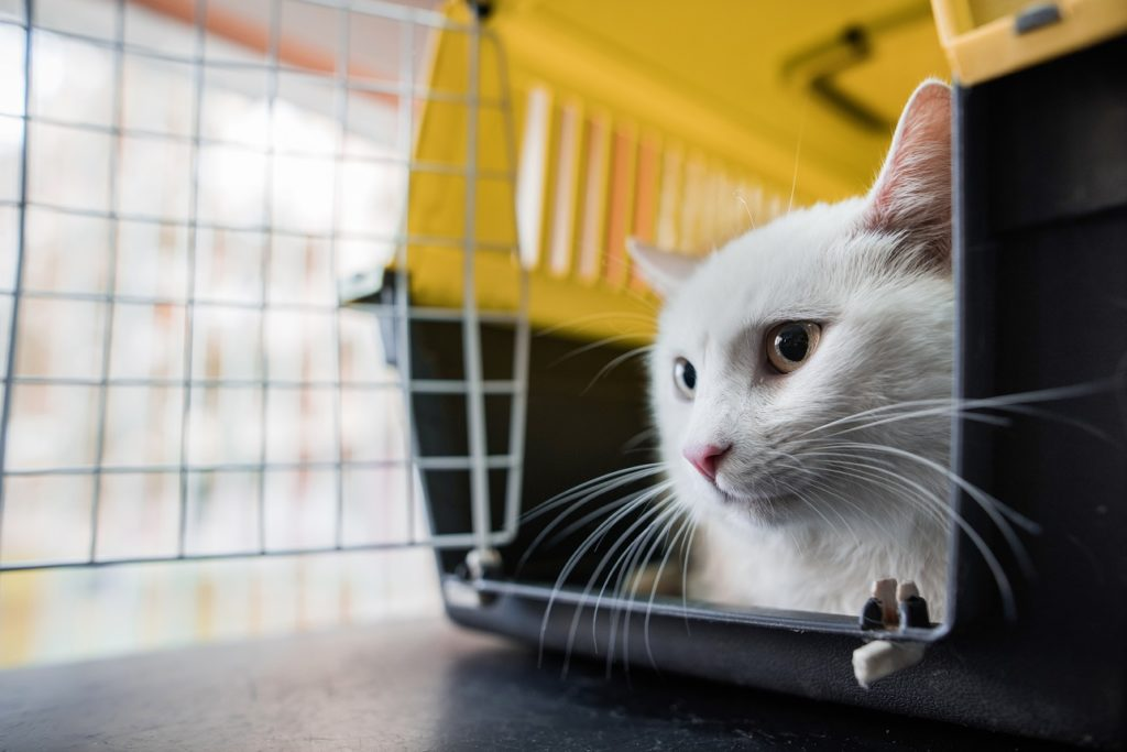 Zoom sur la caisse de transport chat
