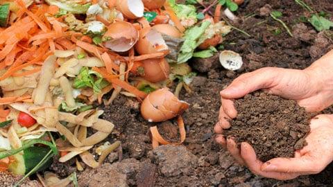 Zéro déchet : que faire de ses déchets organiques ?