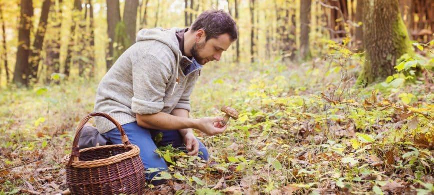 La saison des champignons est arrivée