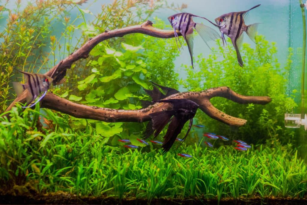 Zoom sur l'aquarium