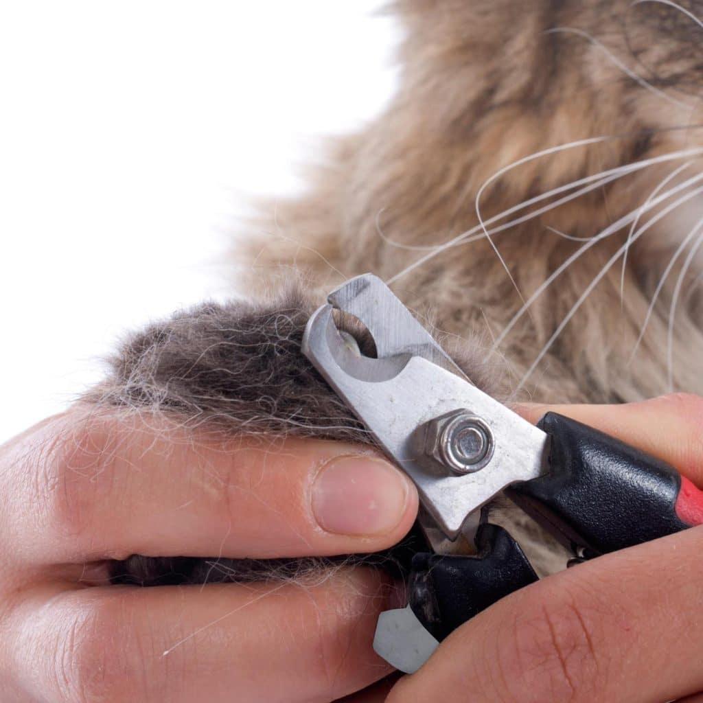 Zoom sur le coupe griffe chat